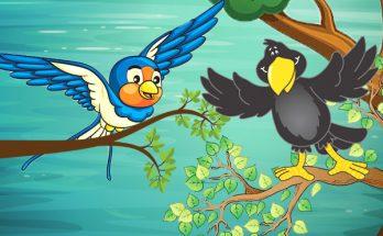 นกนางแอ่นกับกา